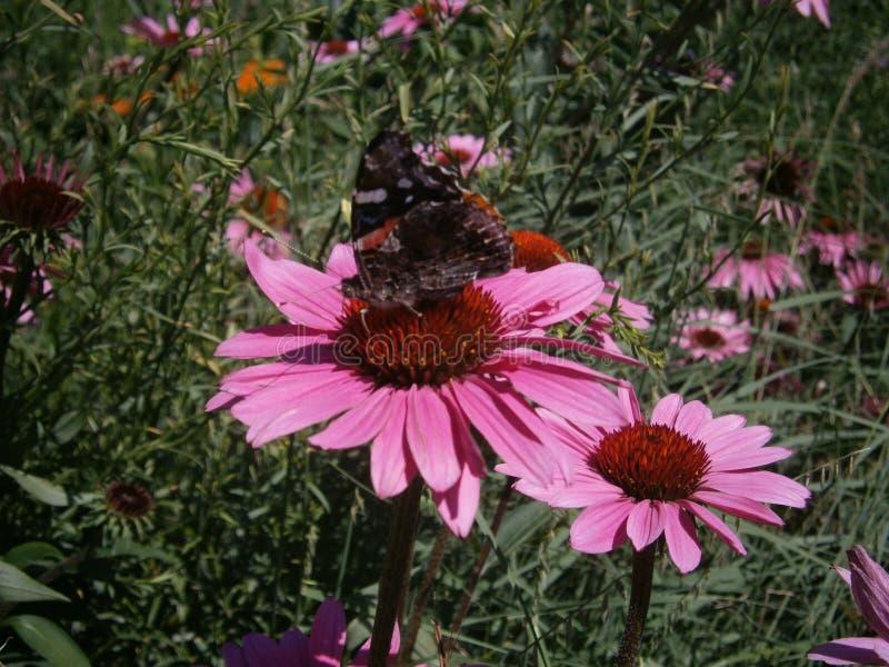 Natura spacer zdjęcie royalty free