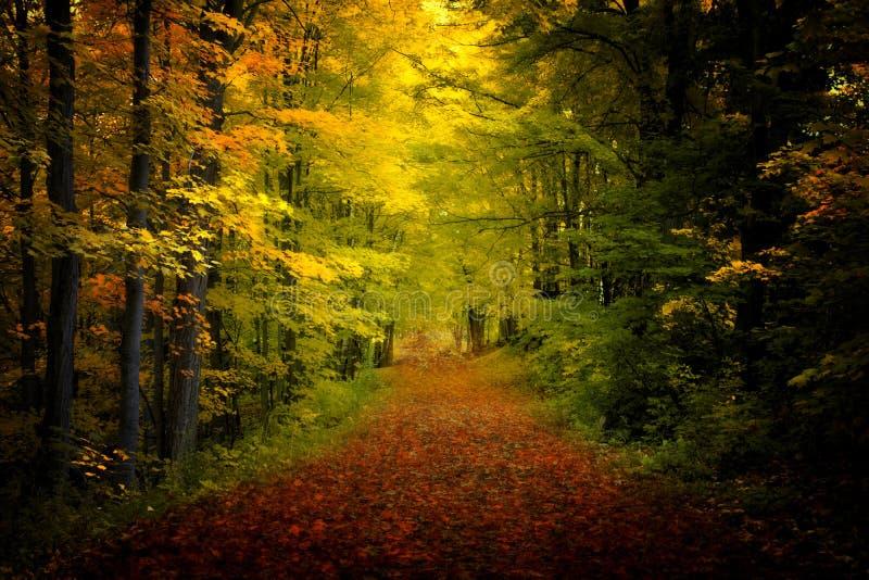 Natura spadku Colours obraz royalty free