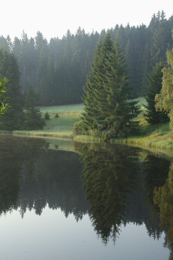 Natura, specchi del lago della montagna Gli alberi sono riflessi nell'acqua fotografie stock libere da diritti