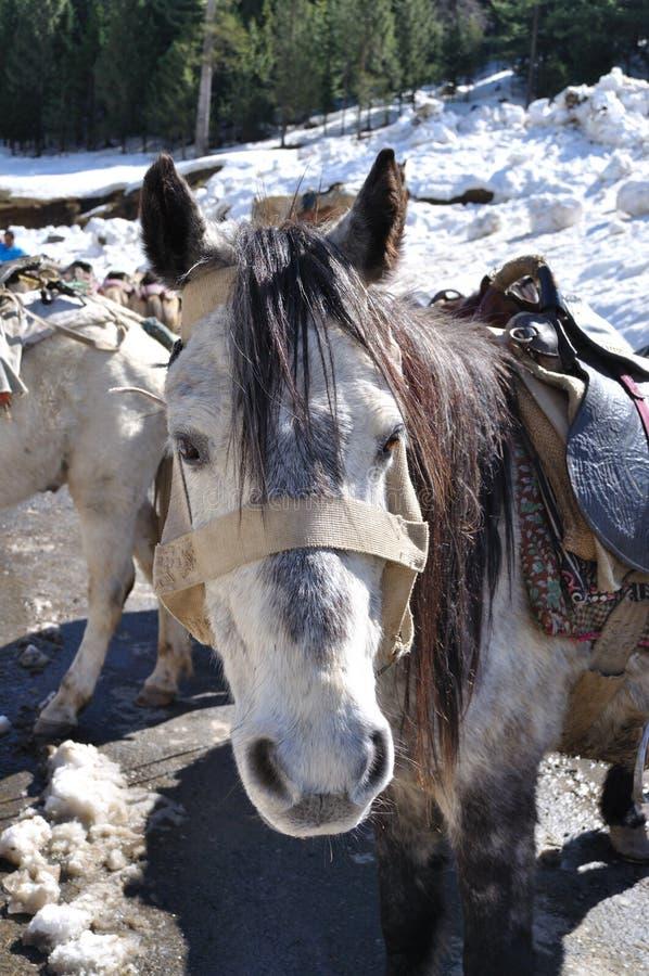 Natura sveglia del mulo. fotografie stock