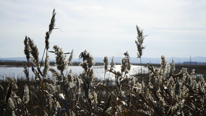 Natura Syberia jesień zdjęcie royalty free