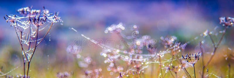 Natura sztandar trawa i pajęczyna zdjęcia royalty free