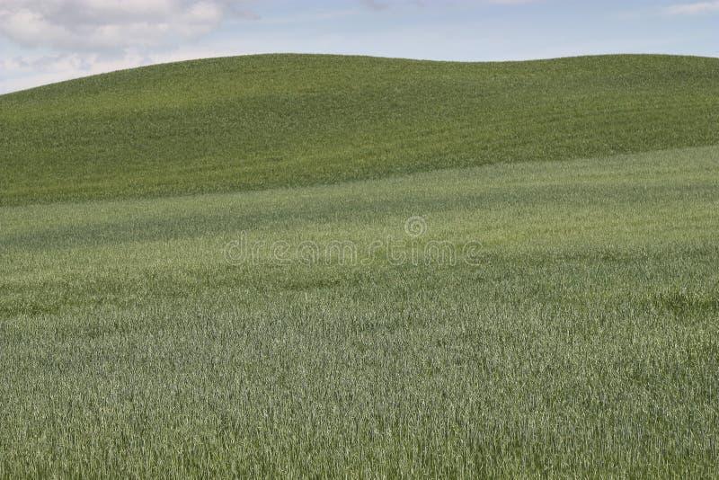 Natura Toscana obrazy royalty free