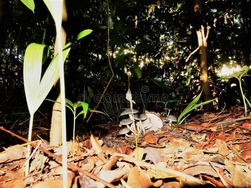 natura in un giorno soleggiato fotografia stock
