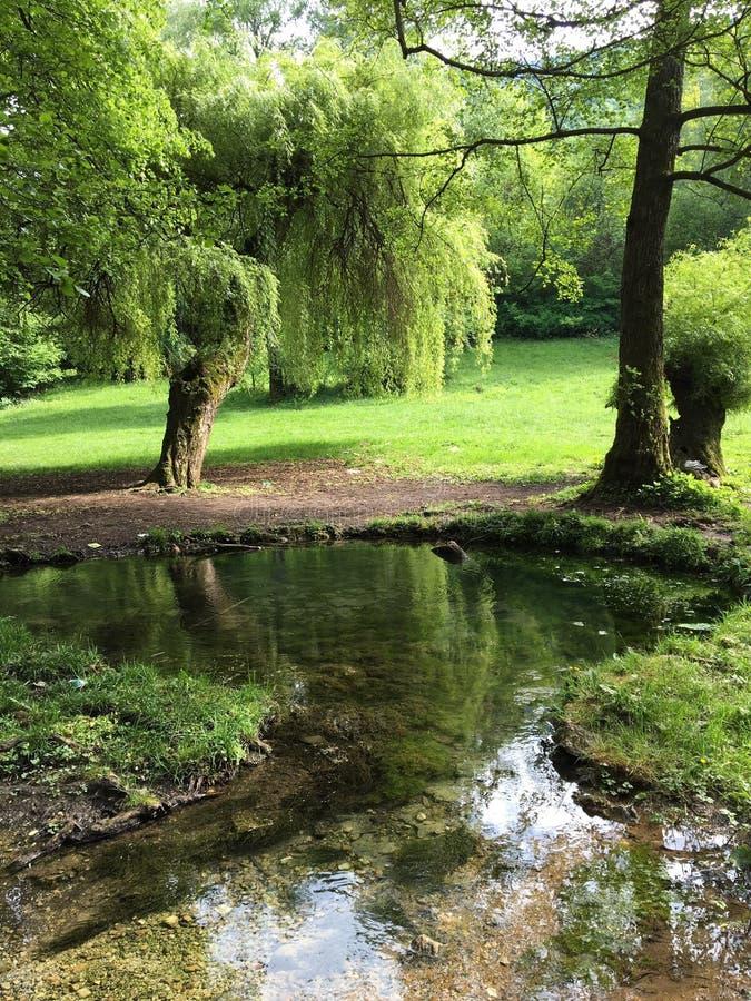 Natura verde fotografie stock