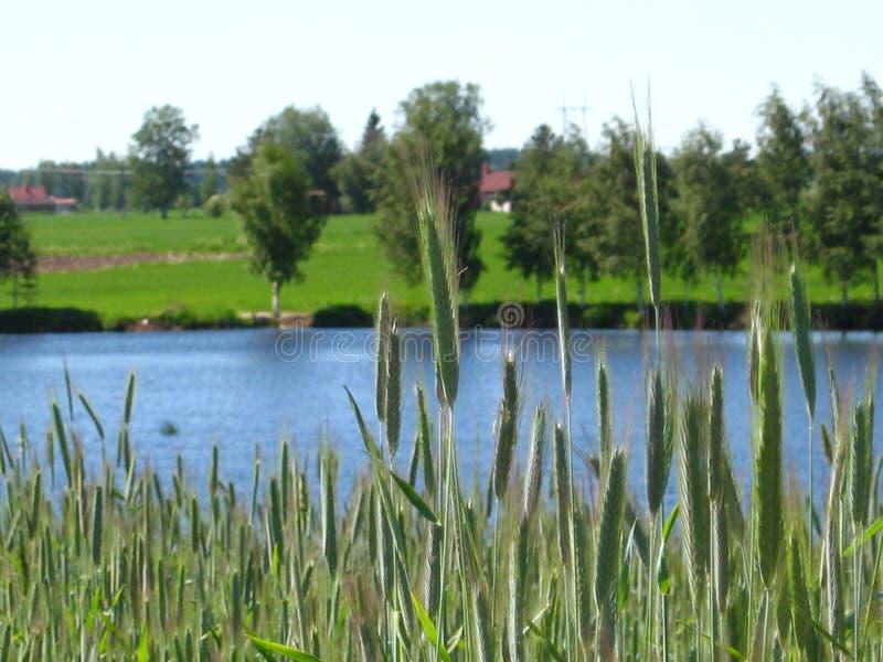 Natura verde immagine stock