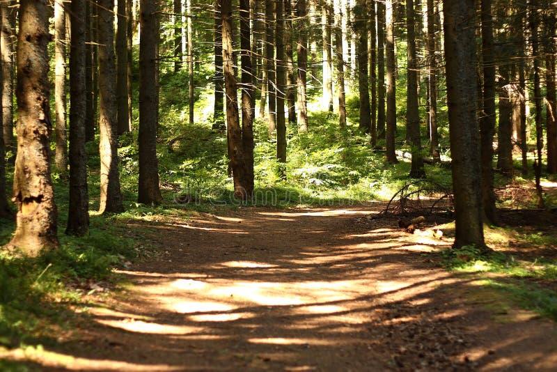 Natura verde più forrest fotografie stock libere da diritti