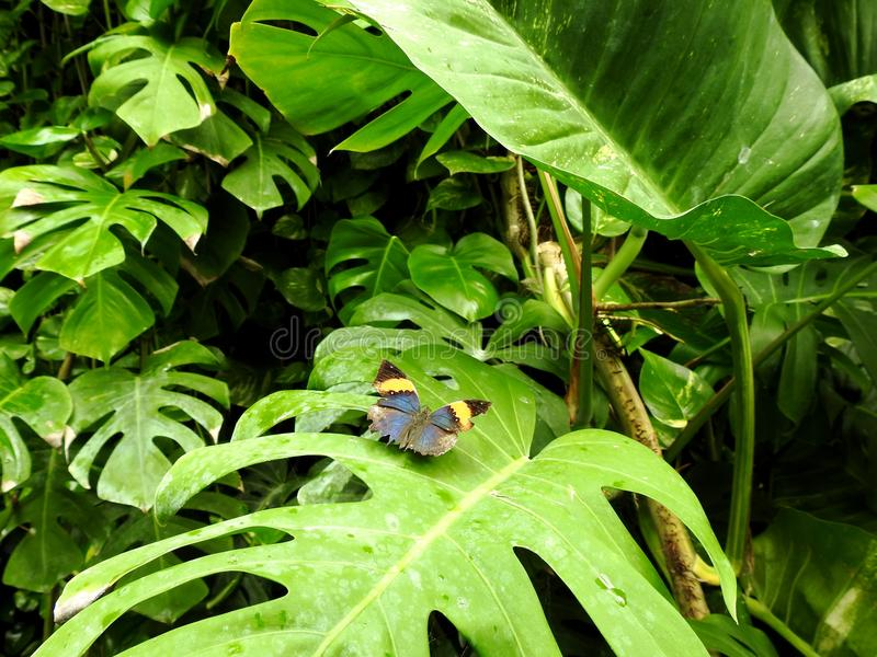 Natura & Vlinder stock fotografie
