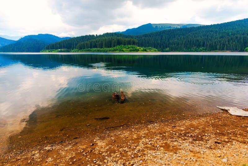 Natura w Bucegi górach, Rumunia zdjęcia stock