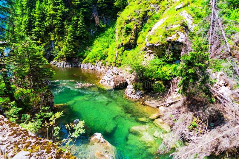 Natura w Bucegi górach, Rumunia zdjęcie stock