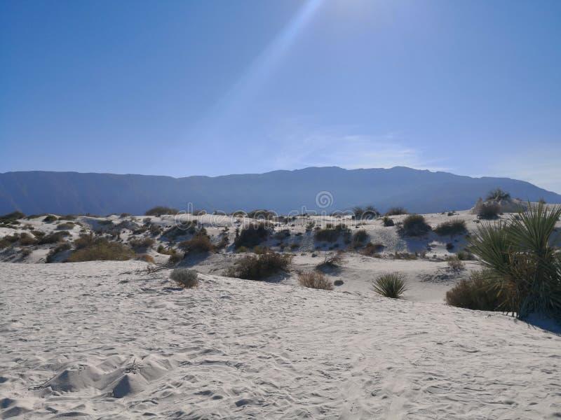 Natura w Coahuila zdjęcia royalty free
