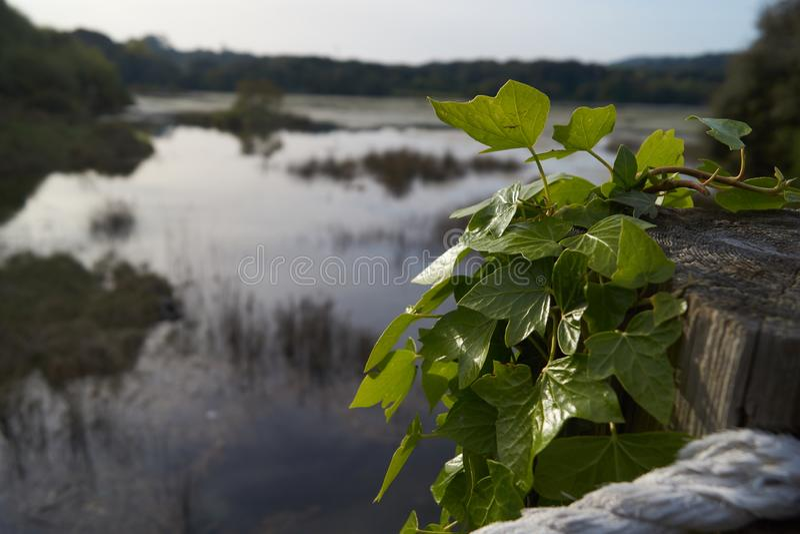 Natura w Hiszpania zdjęcie stock