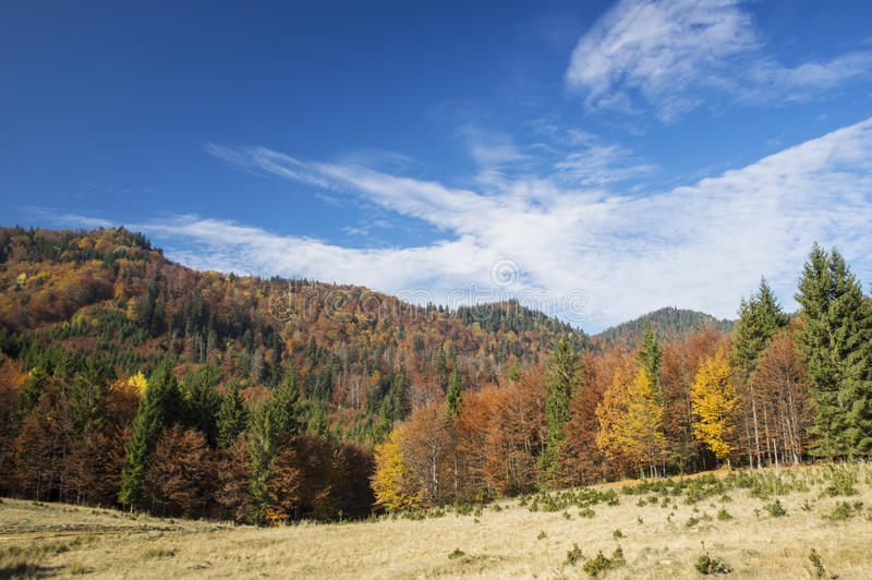 Natura w jesieni zdjęcie royalty free
