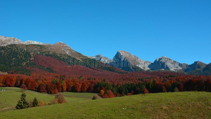 natura w jesieni ubiera w czerwieni zdjęcia stock