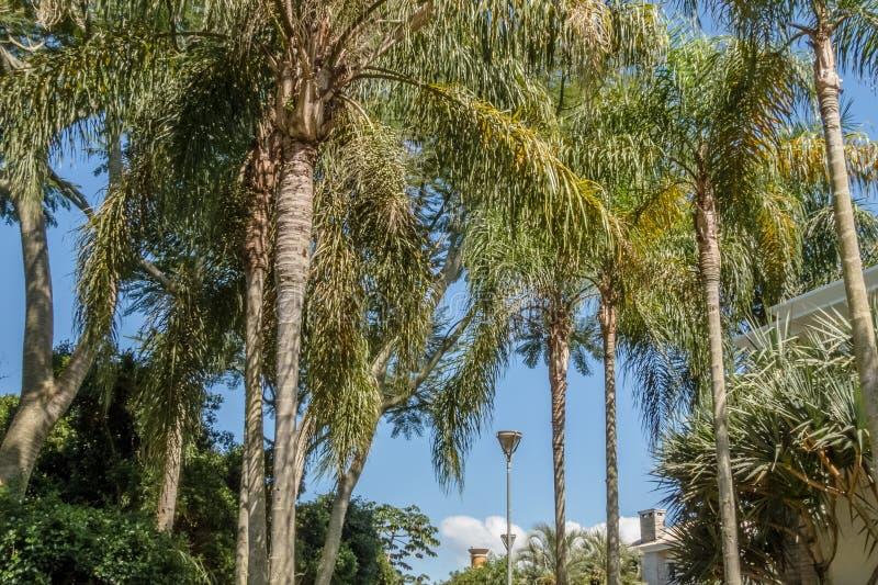 Natura w Jurere zawody międzynarodowi zdjęcia royalty free
