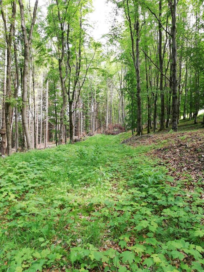 Natura w lesie fotografia royalty free