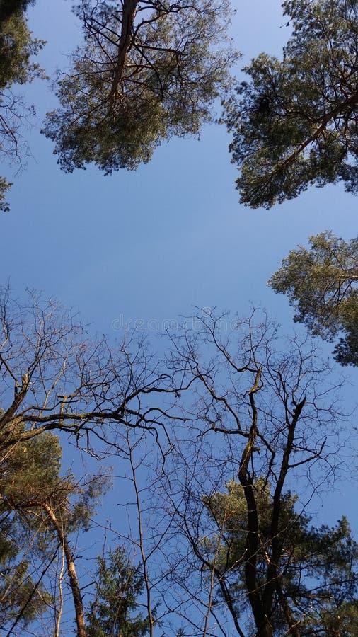 Natura w niebie Gałąź z suchymi liśćmi przeciw niebieskiemu niebu cudownie obrazy royalty free