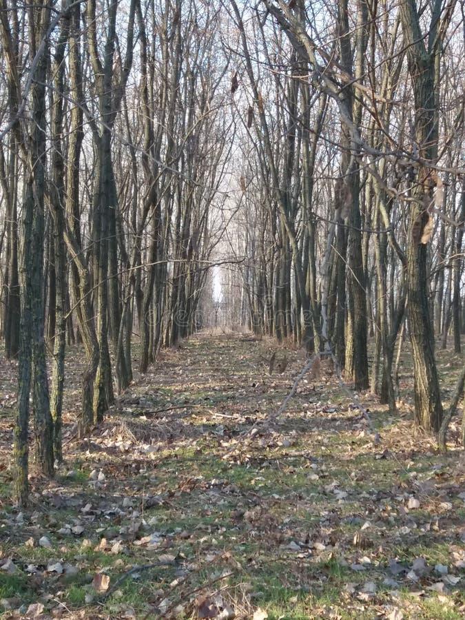 Natura w Węgry obraz royalty free