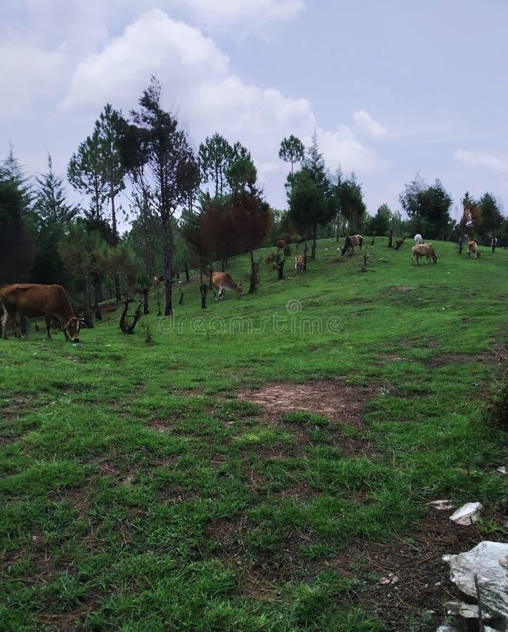 Natura w wzgórze terenie w uttarakhand ind obrazy stock
