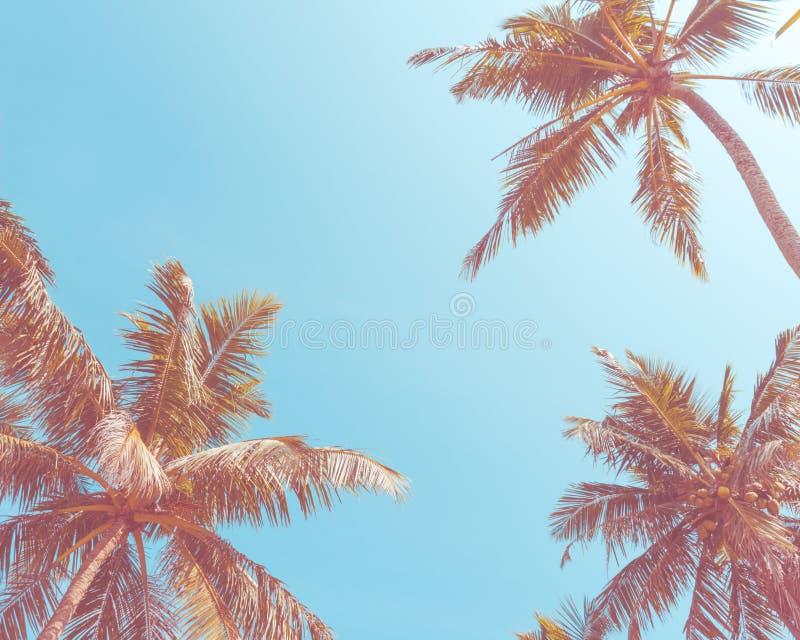 Natura, wakacje letni, urlopowy pojęcie i tropikalni kokosowi drzewka palmowe, - lata jasny niebieskie niebo Dolny widok zdjęcia royalty free