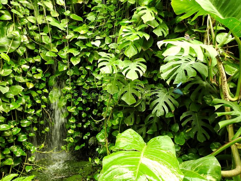 Natura, Wand-Anlagen, Vegetation, Schmetterling stockbild