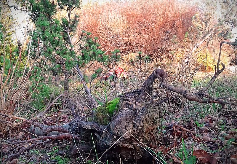 Natura wczesna w spadku zdjęcie stock