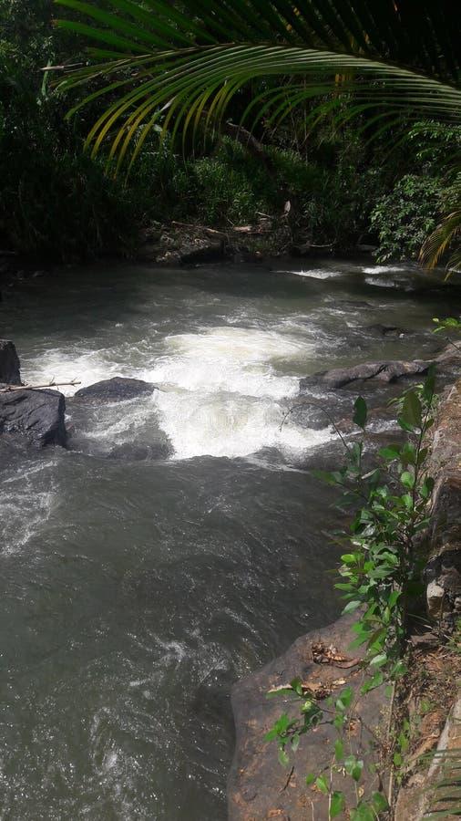 Natura Woda Iść przez ciemności drzewa i pełzacze obrazy royalty free