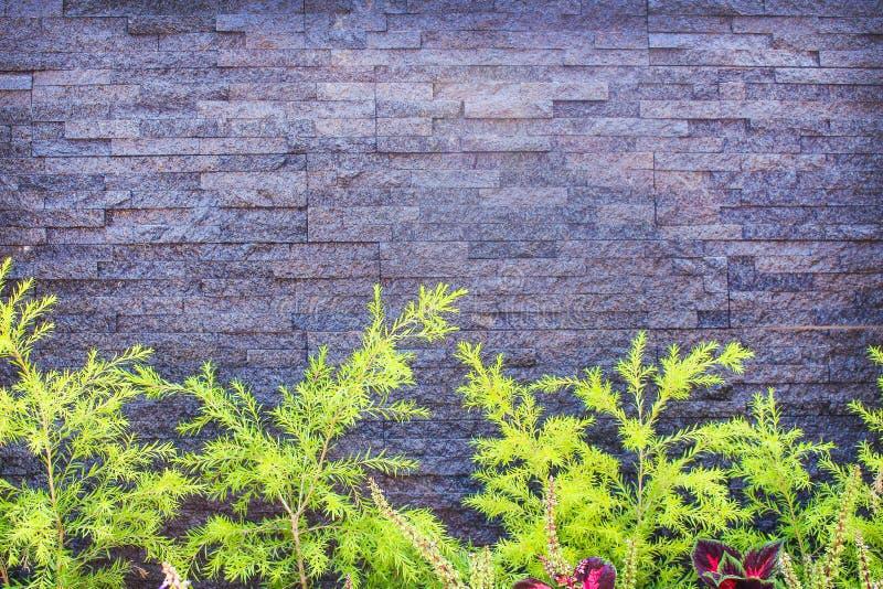 Natura wzory szczegółowego dekoracyjnego szarego grunge łupku kamienna ściana dla horyzontalnego tekstury tła i kolorowej małej z obrazy stock