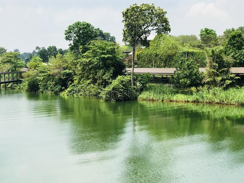 Natura z Greenery widokiem fotografia stock