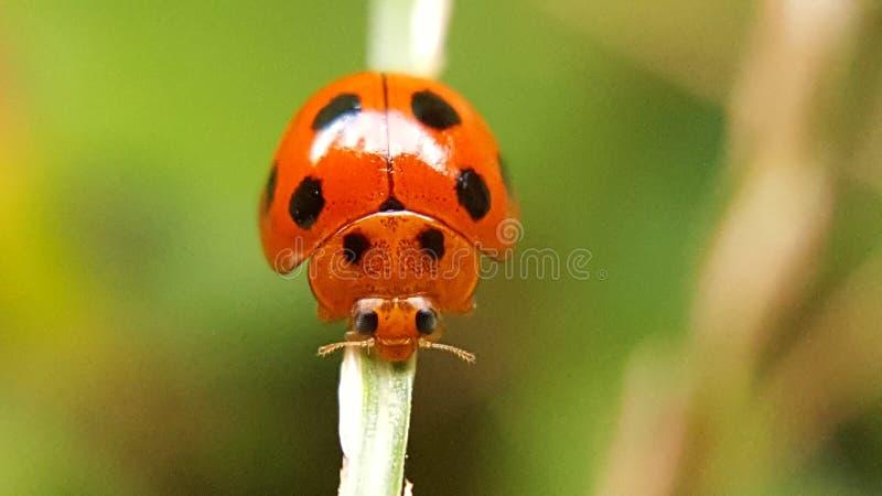 Natura zwierzęcy insekt Tajlandia zdjęcie royalty free