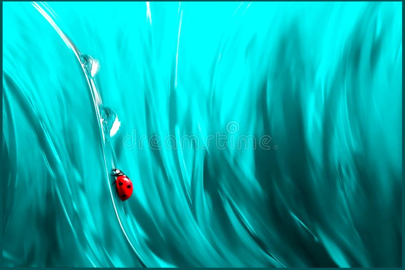 Natural abstract summer spring background. Red ladybug and dew drops against the background of fantastic blue bright grass. Artistic creative abstract image royalty free stock image