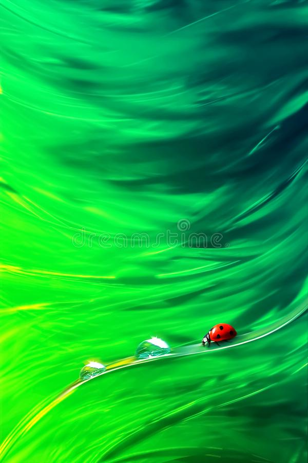Natural abstract summer spring background. Red ladybug and dew drops against the background of green bright grass. Artistic creative image royalty free stock photo