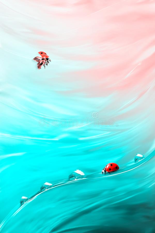 Natural abstract summer spring background. Red ladybug and dew drops against the background of coral and blue bright grass. Artistic creative image royalty free stock images