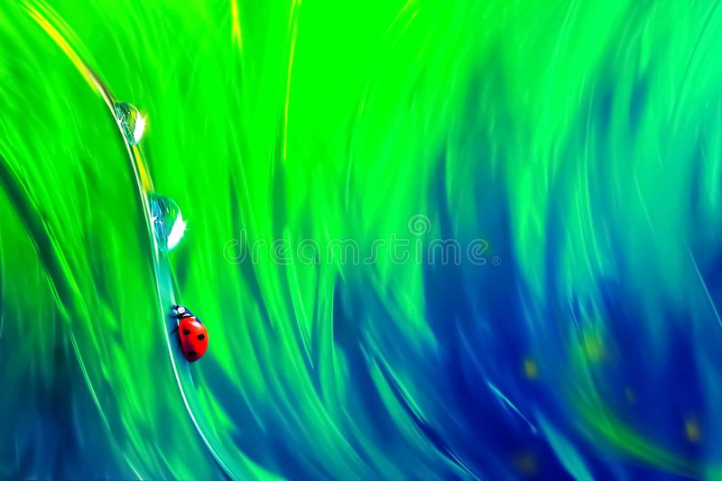 Natural abstract summer spring background. Red ladybug and dew drops against the background of green and blue bright grass. Artistic creative image royalty free stock photos