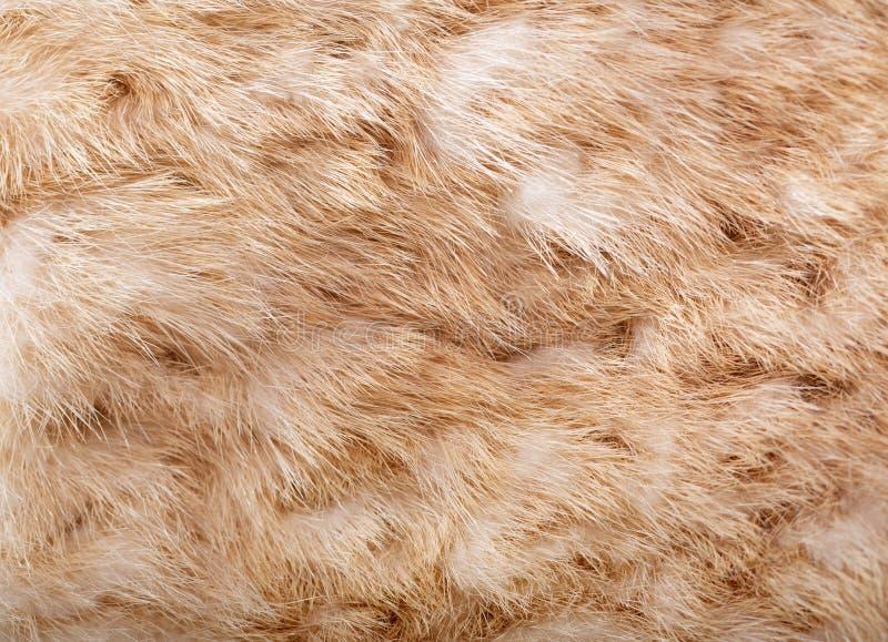Natural animal fur texture royalty free stock photography