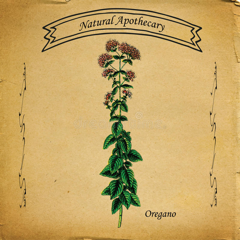 Natural Apothecary Oregano royalty free stock photo