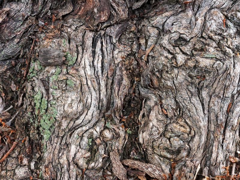 Convoluted Natural Textured Bark Pattern stock photography