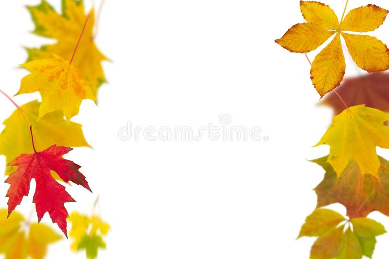Natural autumn foliage isolated on white background. Seasonal decoration and design concept royalty free stock photo
