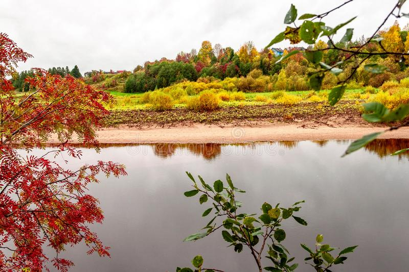 Natural autumn landscape with village view on river shore on natural fall rowan mountain ash tree background. Selective soft focus. Text copy space. Autumn royalty free stock photo