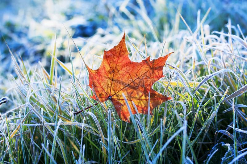 Natural background beautiful bright Golden maple leaf lies on t stock image