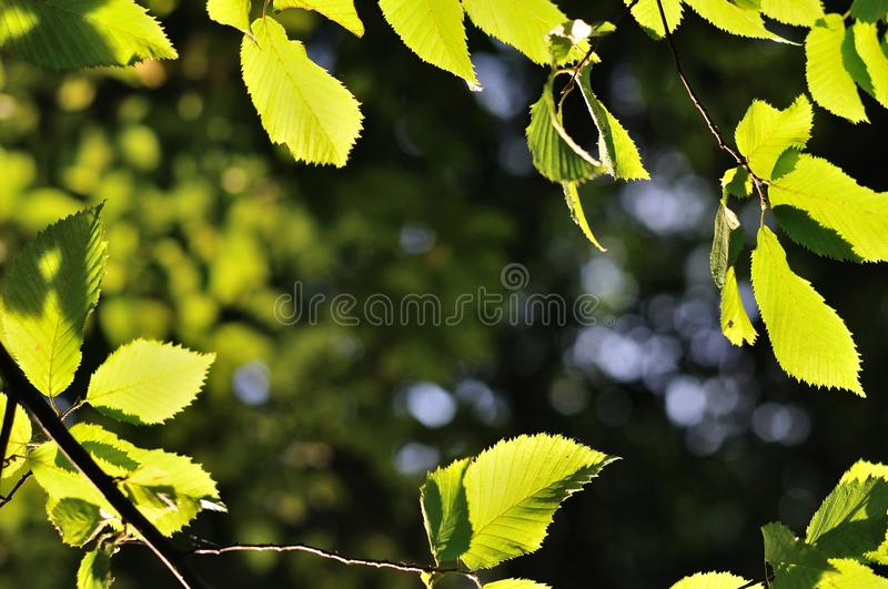 Natural background framed by leaves stock image