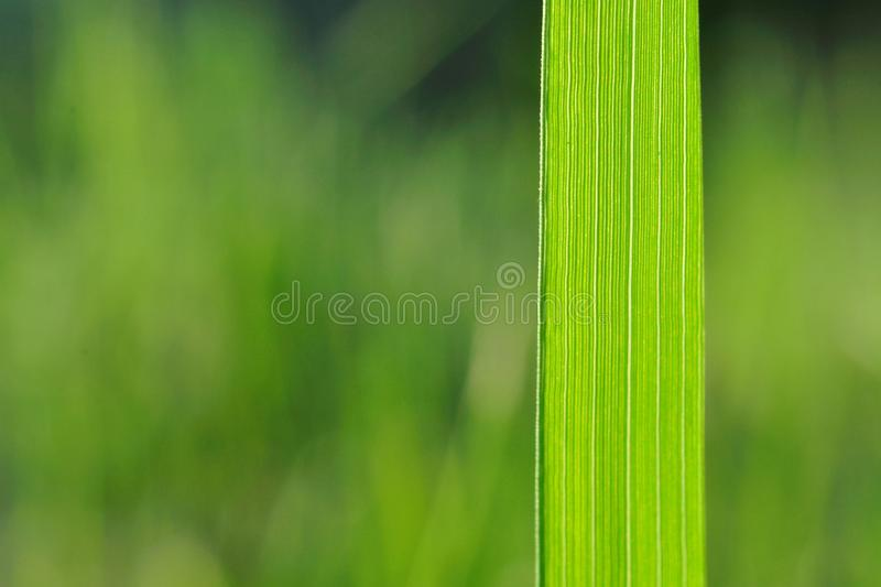 Natural Background With Green Grass Blade Stock Image Image of
