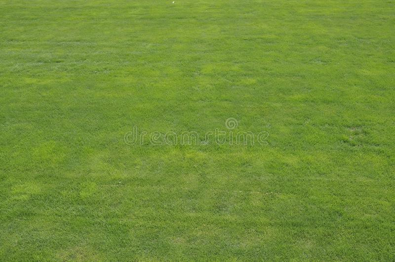 Natural background of green grass from the famous Temple of Heaven Park in Beijing royalty free stock image