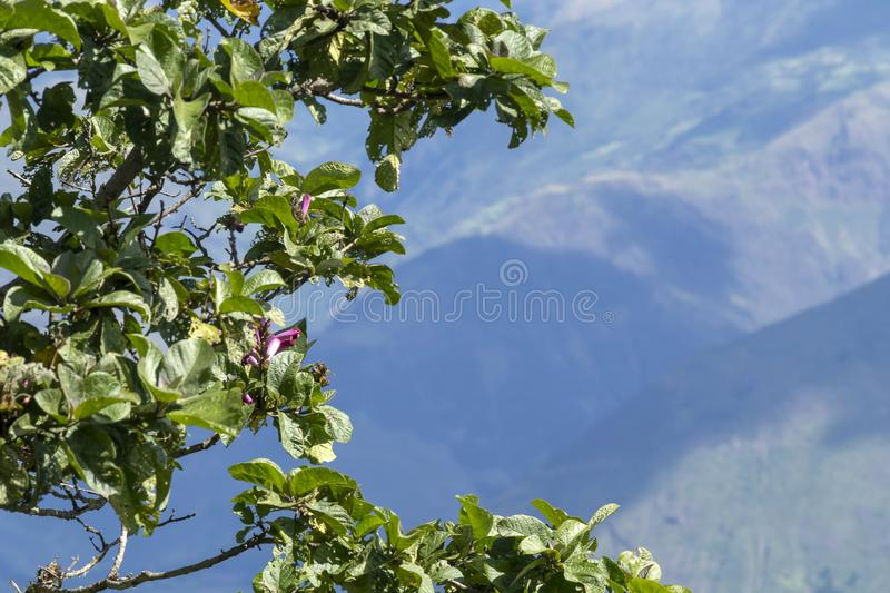 Natural background of green jungle close up with copy space. Backdrop of rainforest tree royalty free stock images