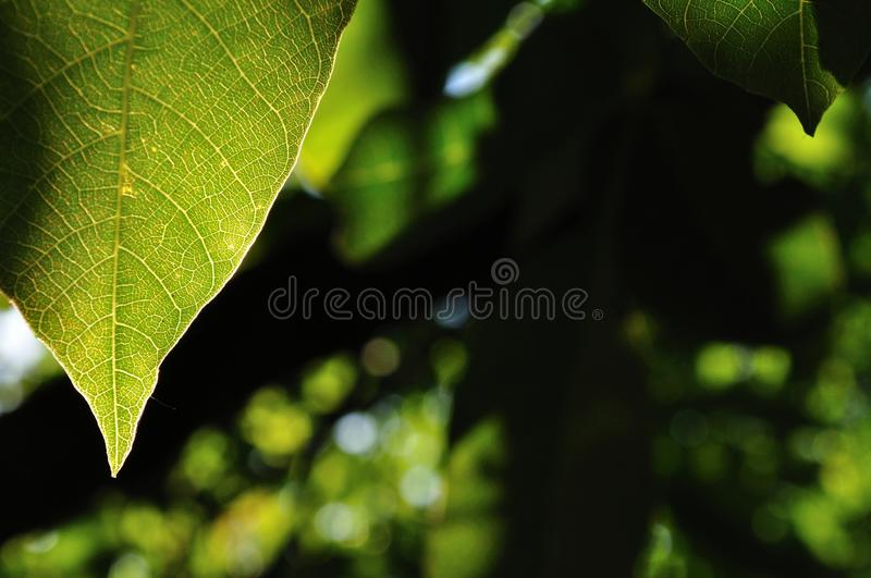 Natural background with green leaf stock photo