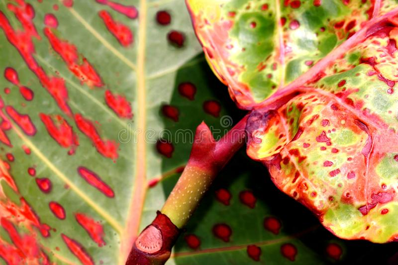Natural background of green plant leaf royalty free stock photo