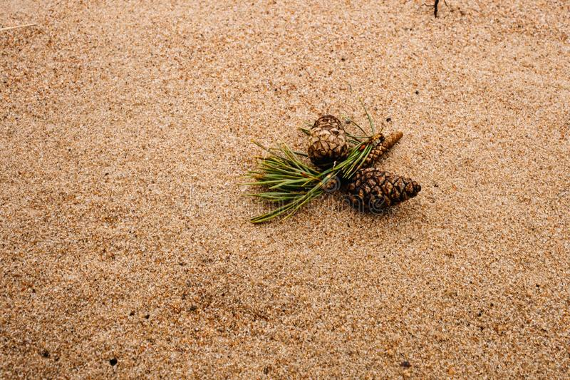 Natural background with pine cone and bumps lying on sand royalty free stock photography