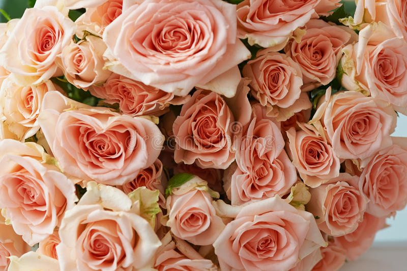 Natural background, pink roses, texture of pink roses for desktop, background. Beautiful and delicate spray roses. Natural background, pink roses, texture of stock photography