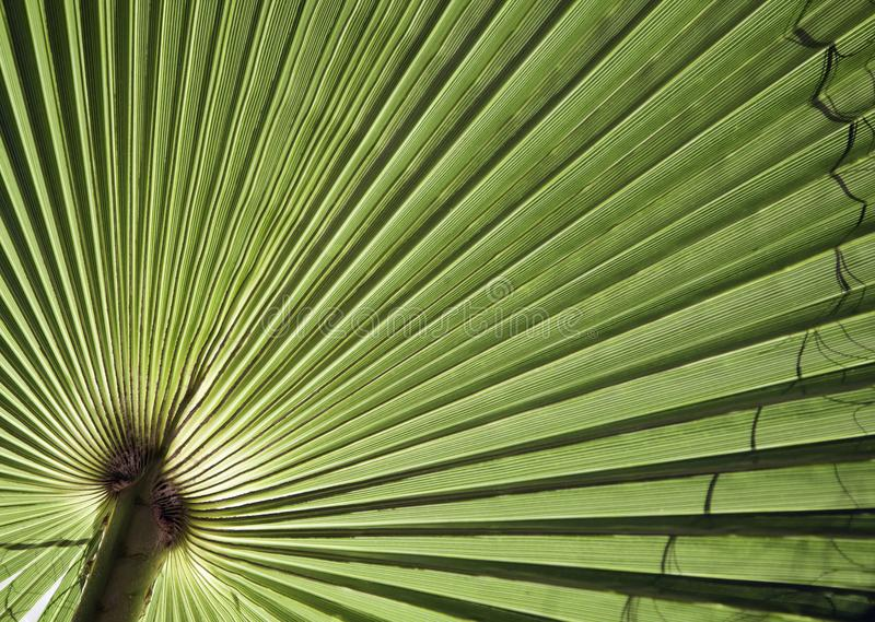 Natural background texture. Light and shadow. The palm leaf. Contrast lighting, bright light and dark background royalty free stock photo