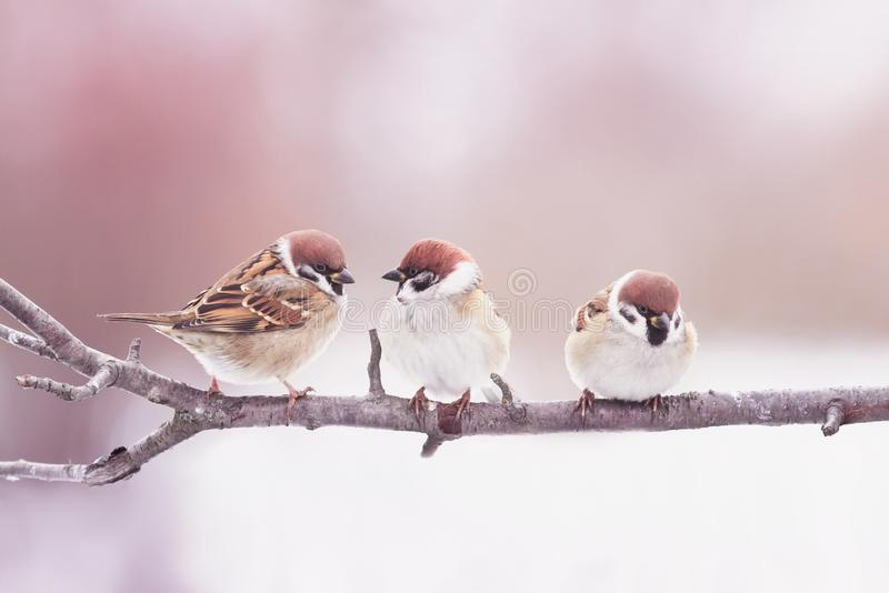 natural with three little funny birds sparrows sitting on a branch in Sunny spring garden stock photography